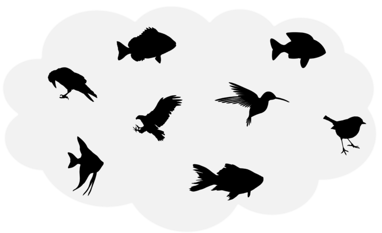birds and fish